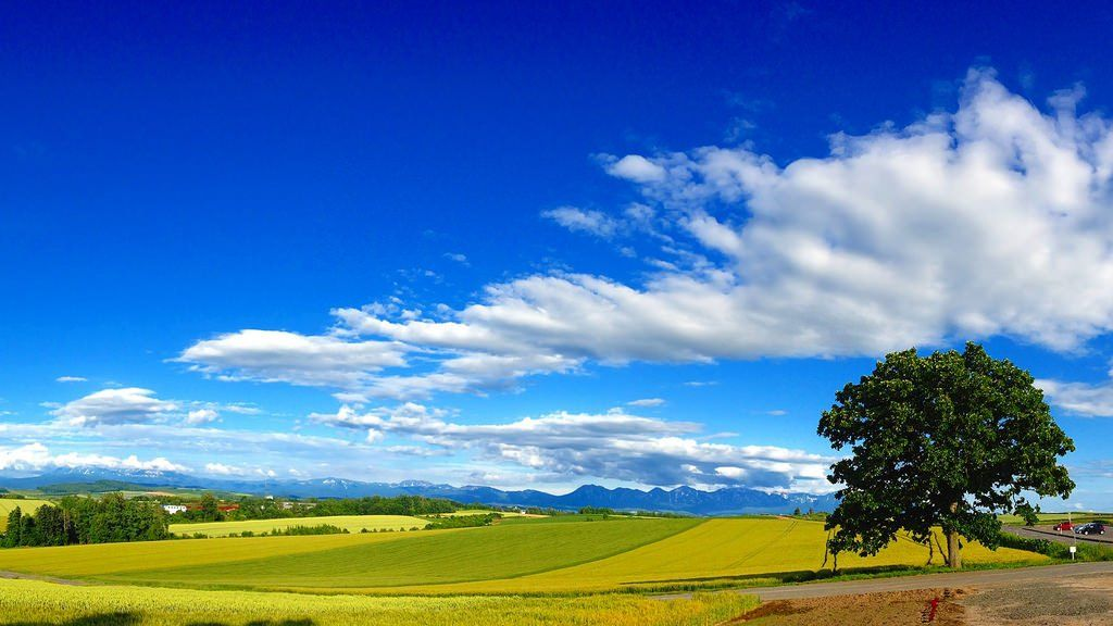 北海道・美瑛の丘を観光!絶景の見頃は?季節別のめぐり方!【写真あり】