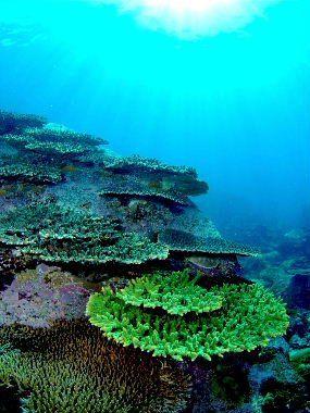 高知の柏島は海がメチャ綺麗!アクセス・宿泊・海水浴やキャンプなど