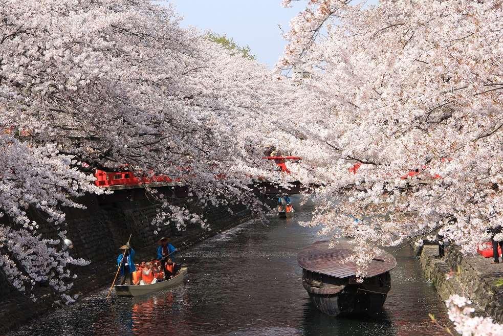 岐阜県内には桜の名所がいっぱい!撮影したくなるスポットを紹介!