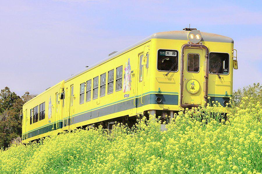 いすみ鉄道のレストラン列車でフルコース!ムーミンや菜の花の絶景に会える!