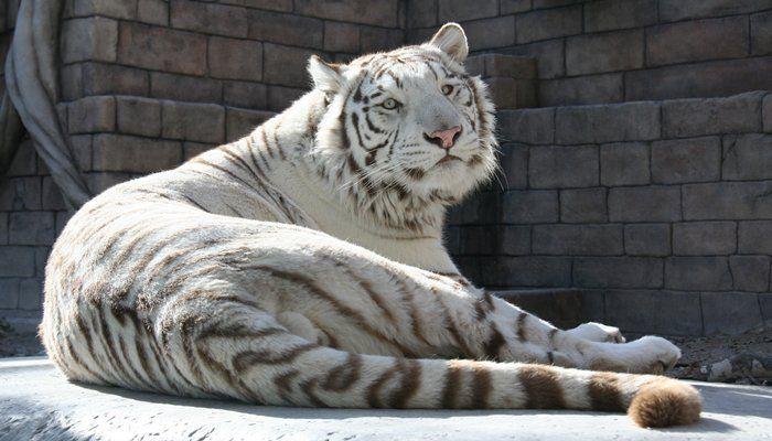 埼玉の動物園のおすすめはここ!入園無料も!珍しい動物にも会える!
