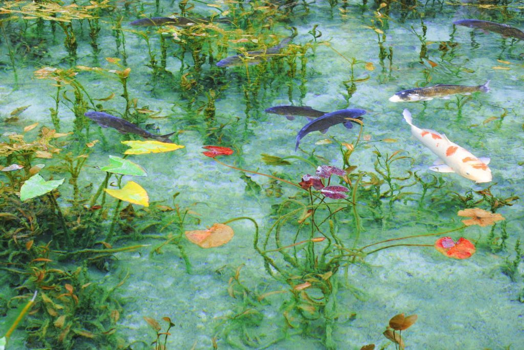 関市のモネの池(根道神社)への行き方は?駐車場など情報まとめ