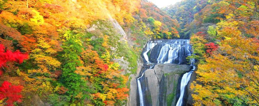袋田の滝の紅葉を見に行こう!ライトアップした幻想的な風景も見れる!
