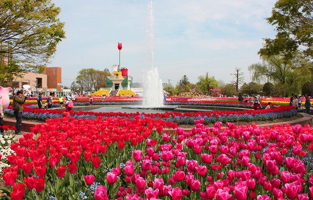 富山チューリップ祭りは日本一!見頃は?シーズンごとの花も見逃せない!