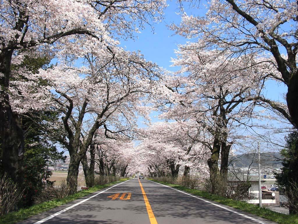 さくら市観光!栃木県『さくら』の名所!おすすめの人気スポットはココ!