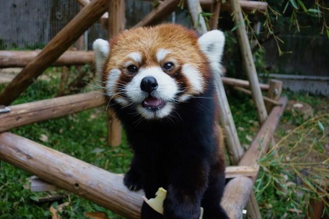 岡山・池田動物園は人気スポット!アクセスや入園料・割引は?お花見もできる?