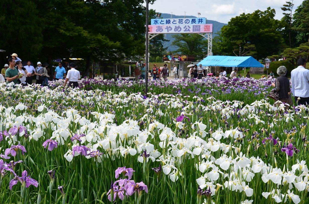 長井市の観光スポットとグルメを紹介!おすすめのランチは?