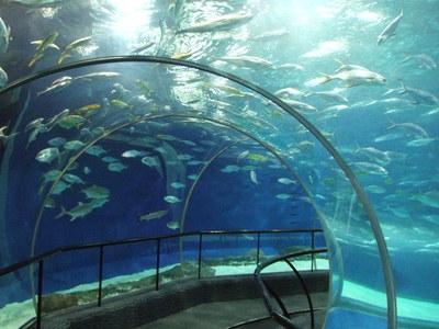 上海海洋水族館の海底トンネルはアジア最長!見どころやアクセスは?