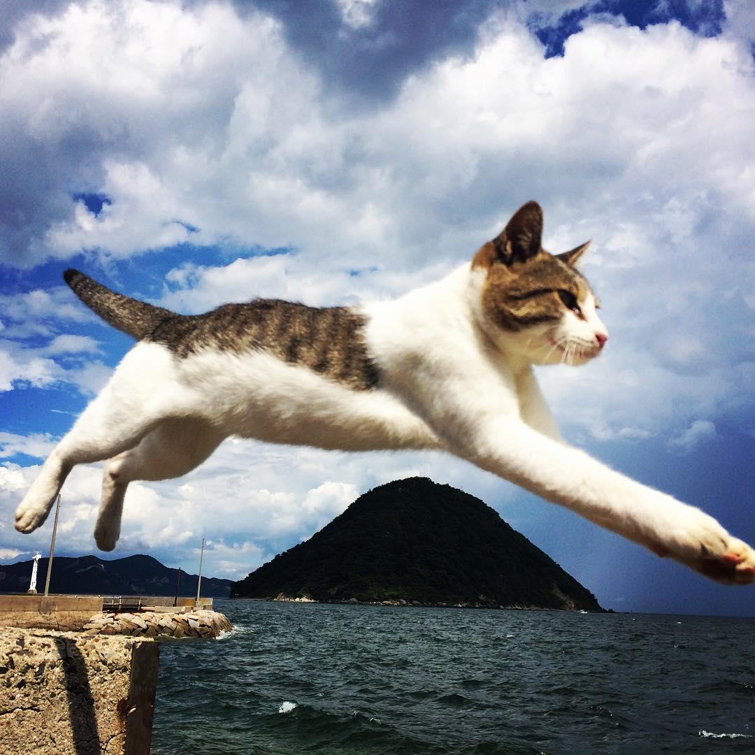 佐柳島は猫の島!観光や釣りなどの遊び・食事をまとめ!アクセス情報もあり!