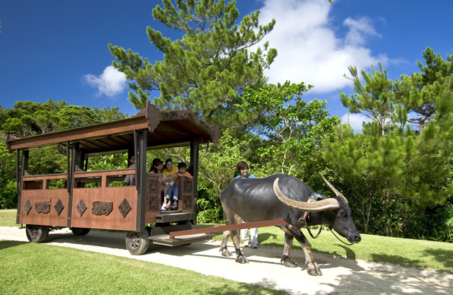 「ビオスの丘」沖縄の亜熱帯植物鑑賞やカヌーに乗れるスポット!