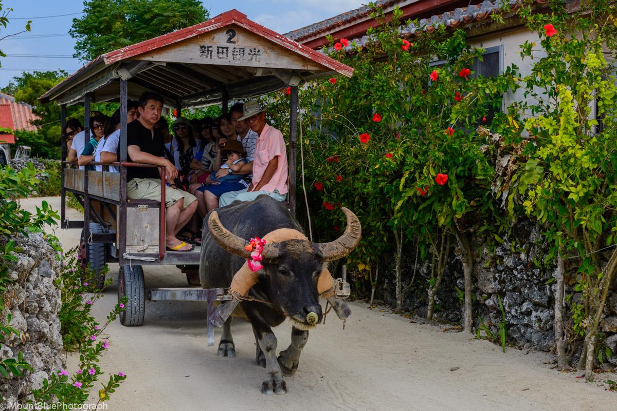 竹富島を水牛車に乗って散歩!料金や所要時間もご紹介!集落をのんびり散策!