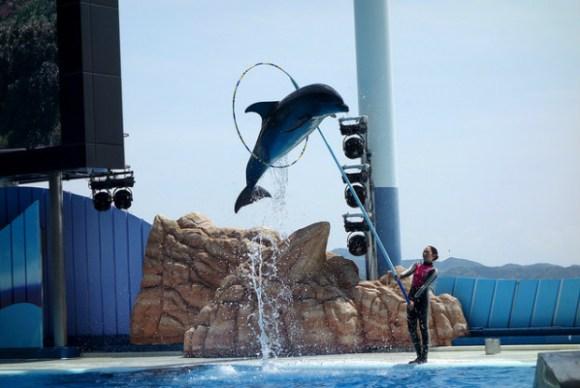 和歌山県にある動物園・水族館特集!見所満載の全8か所一挙ご紹介!