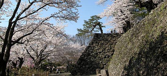 小諸懐古園の見どころ紹介!駐車場は?小諸城址で桜や紅葉を満喫しよう!