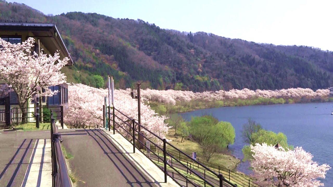 土師ダムは桜の名所!釣りにサイクリングと家族で楽しめるアクティビティも!