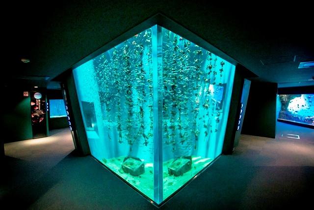 宮島水族館はスナメリで話題!アクセス・割引・料金情報!おすすめのお土産は?
