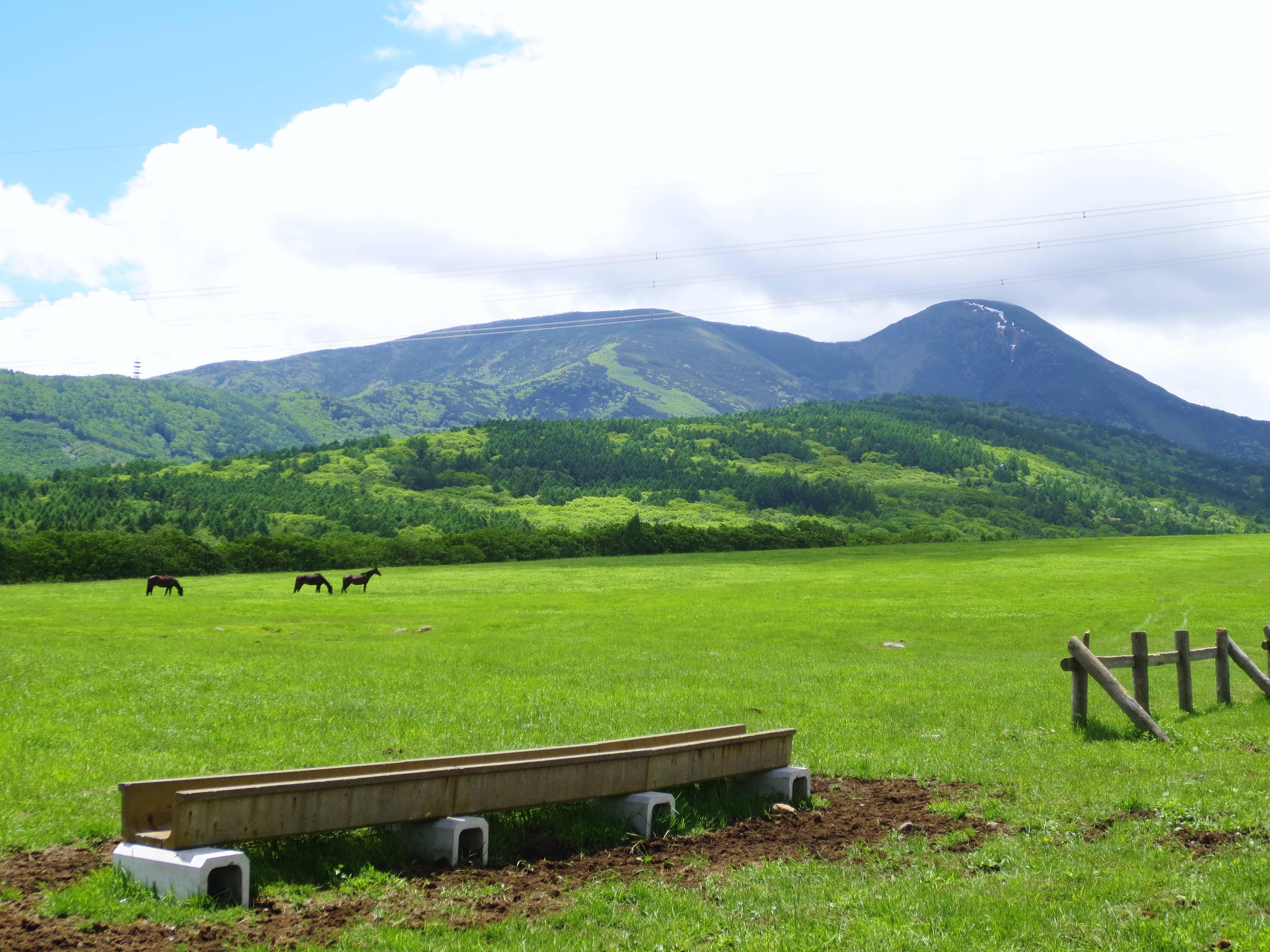 蓼科牧場のおすすめ&体験スポットをご紹介!自然に触れ合いリフレッシュ!