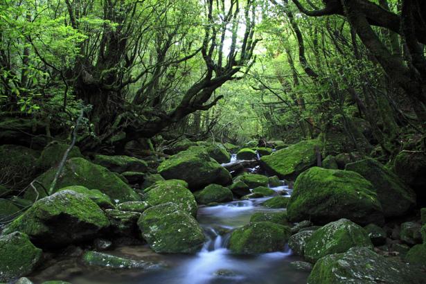 屋久島の縄文杉は樹齢数千年!魅力あふれる森のガイドツアー所要時間は?