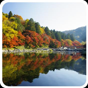 香嵐渓の紅葉の見頃は?ライトアップでおすすめの場所や人気が少ない穴場まで!