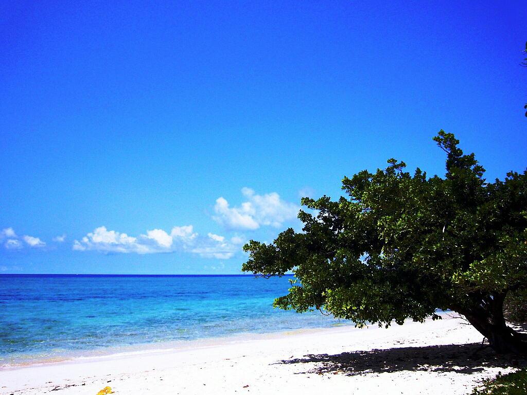 鳩間島を観光!シュノーケルやダイビングもおすすめ!「瑠璃の島」のロケ地!