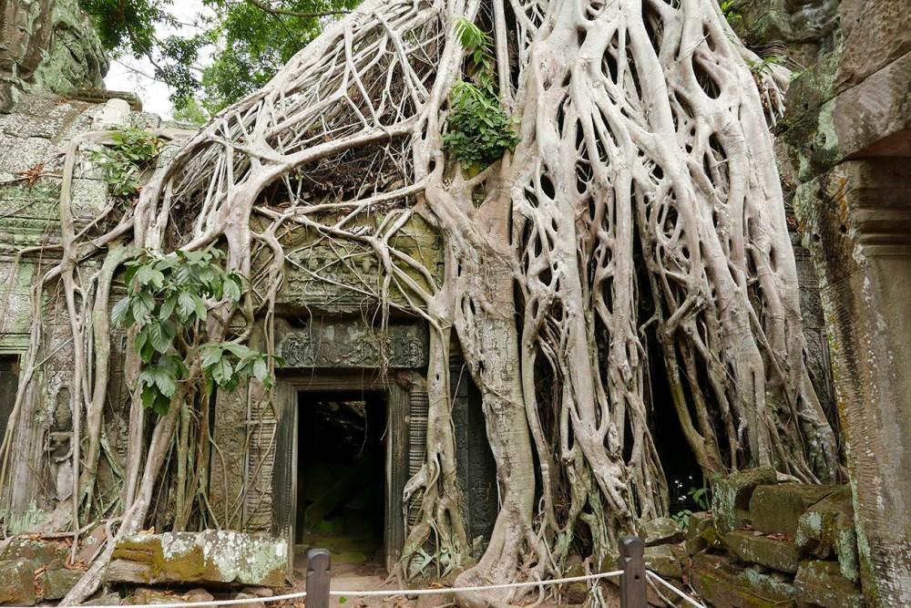 タプロームはまるでラピュタの世界!巨木に侵食された神秘の遺跡!