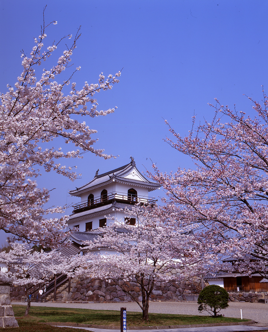 白石城を観光しよう!アクセス・駐車場情報!桜もきれいでおすすめ!