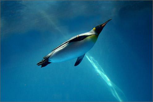 長崎ペンギン水族館は参加体験型!餌やり・シーカヤックも!アクセスは?