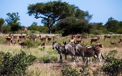 南アフリカの観光スポット17選!世界遺産やサファリなど!ワインはおすすめ!