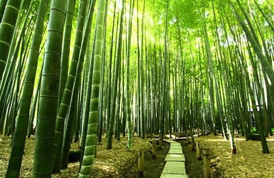 鎌倉へ女子旅行くなら?日帰りでも楽しめるおすすめプランを紹介!