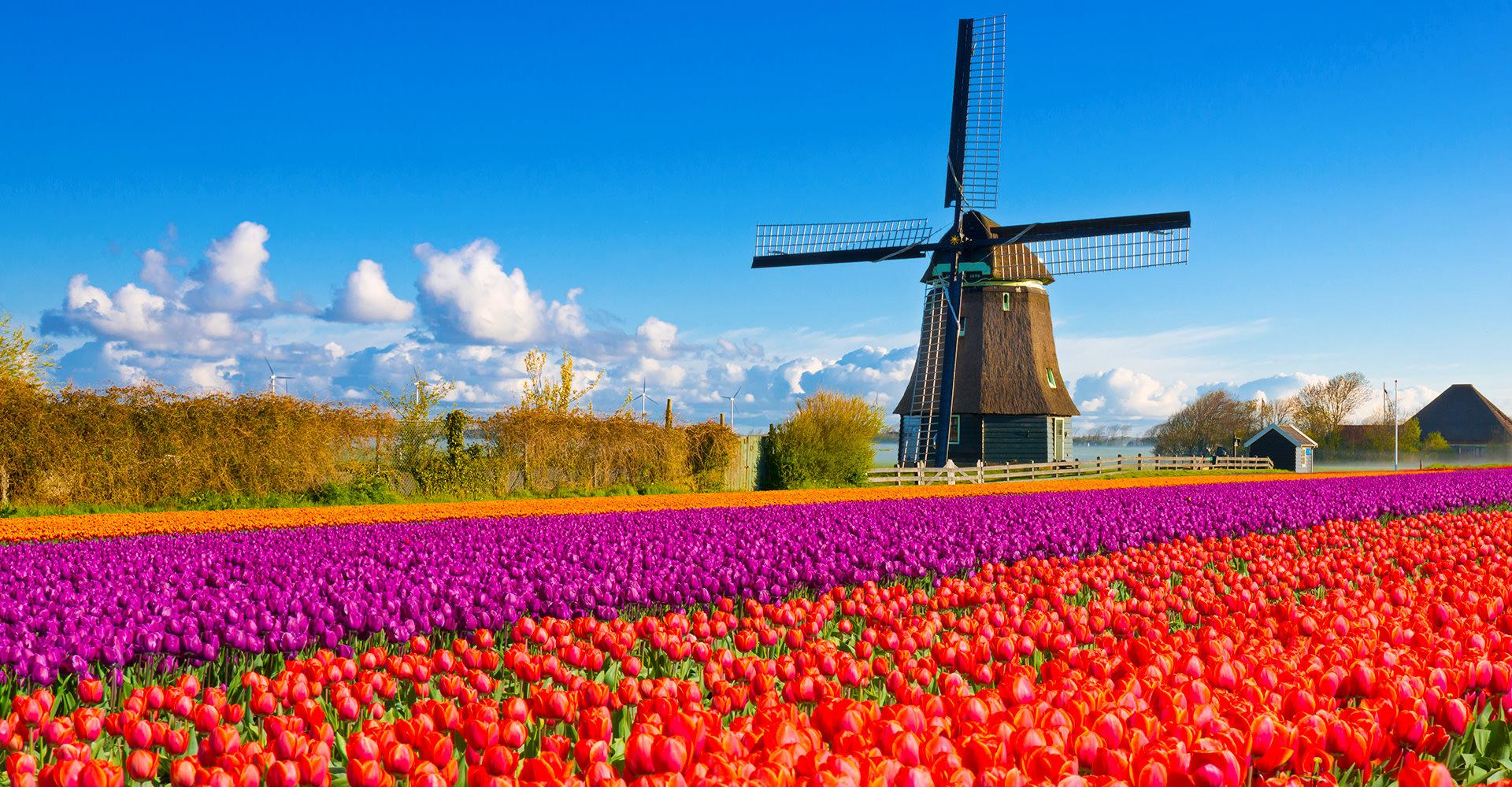 オランダの観光&旅行スポット21選!運河や美術館など人気の見所を網羅!