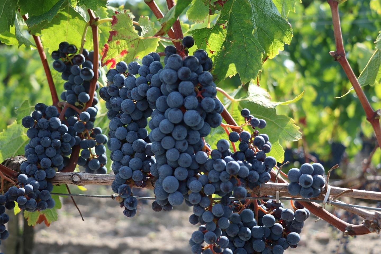ボルドー観光のおすすめは?フランス南西部に位置する港街のグルメにワイン!