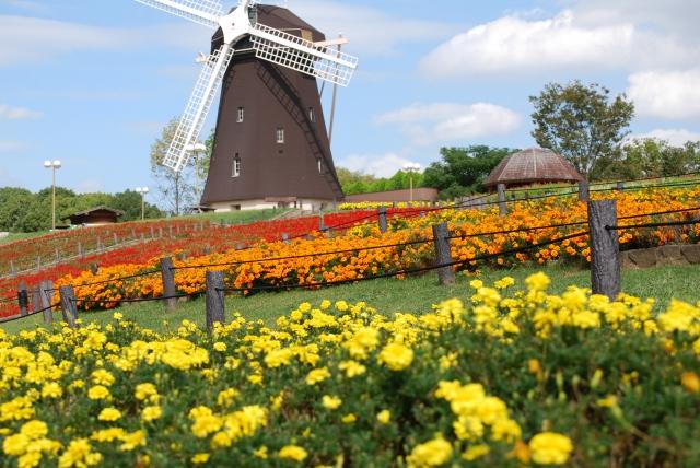 オランダのおすすめ料理13選!名物をテイクアウトをして食べ歩きを満喫!