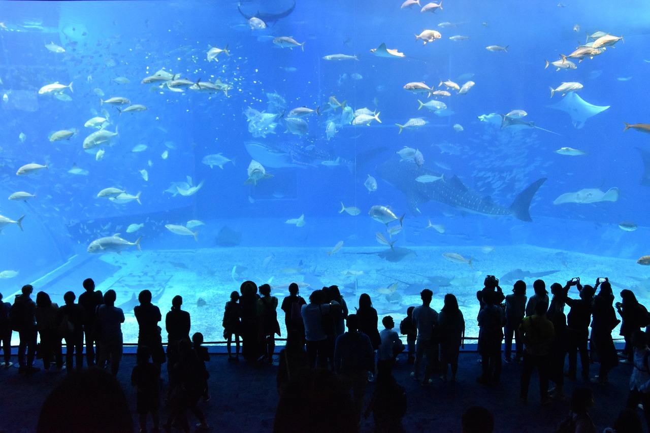 ワイキキ水族館はハワイのおすすめスポット!料金や行き方は?