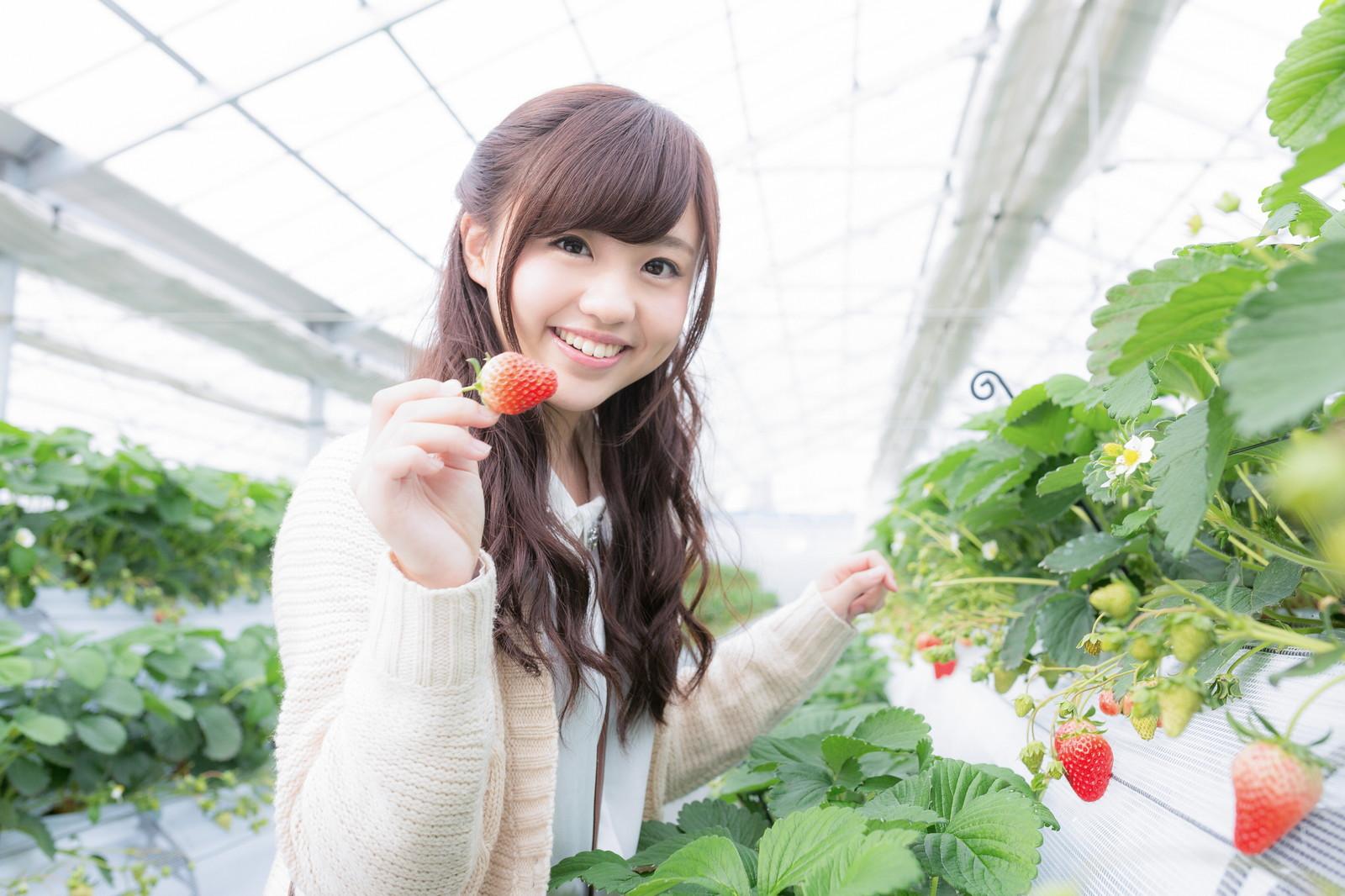 兵庫県のイチゴ狩りでおすすめは?予約なしでOKの農園や食べ放題など!