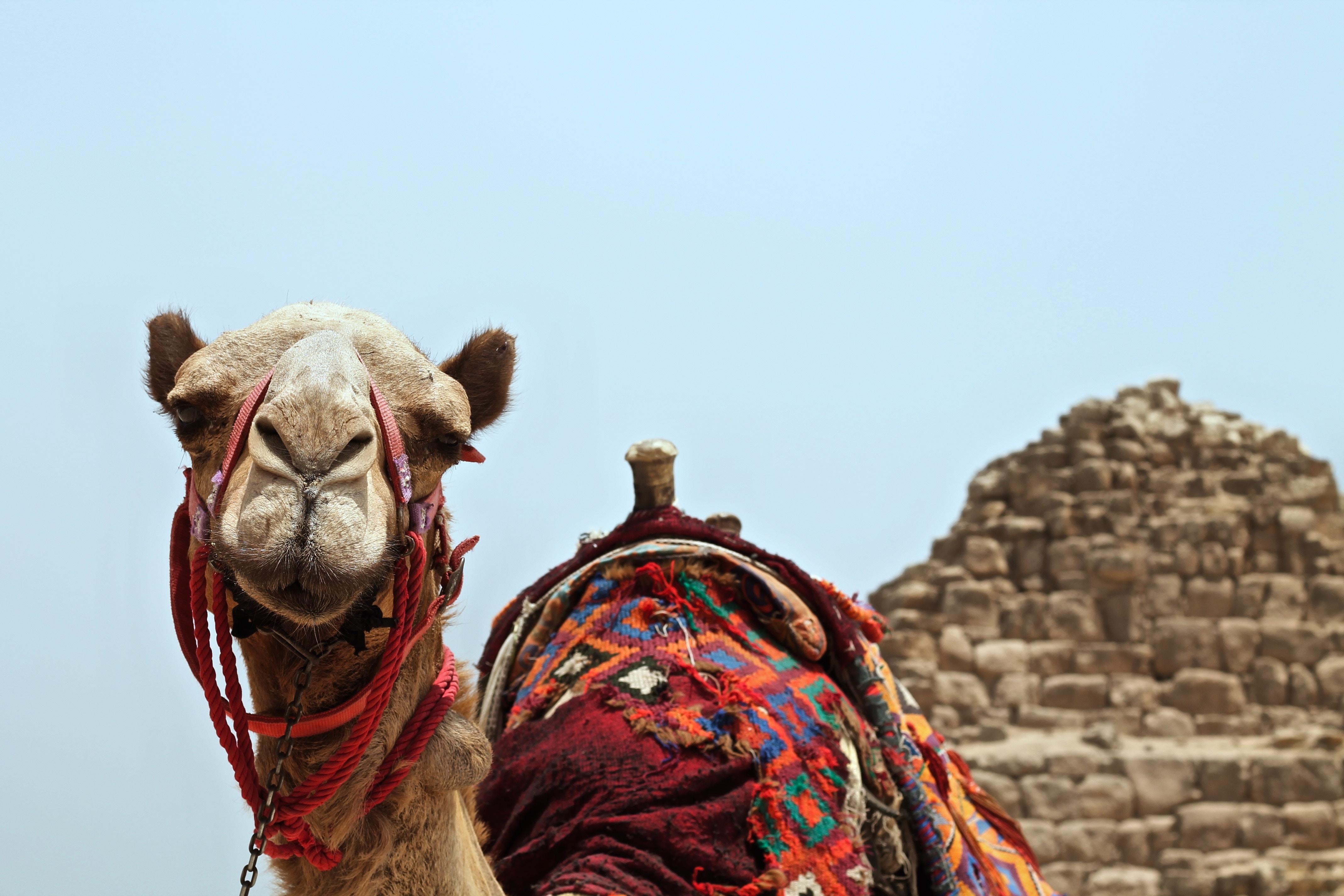 エジプトの首都カイロ観光おすすめ7選!歴史地区で世界遺産を堪能!
