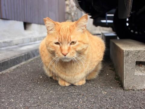 江ノ島は猫の島で有名!聖天島公園はおすすめの穴場スポット!