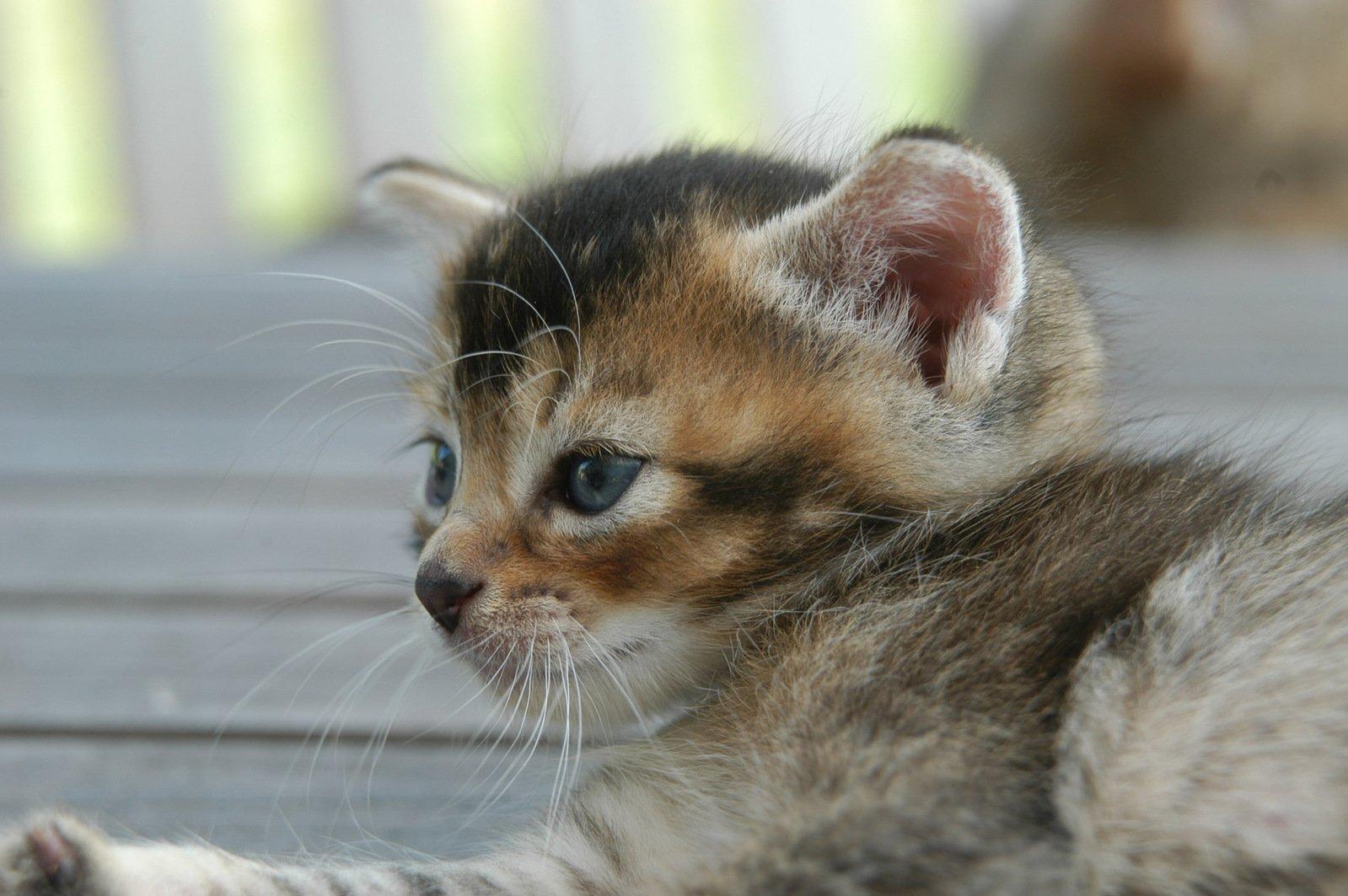 池袋の猫カフェで至福の時間!おすすめ店や気になる料金も紹介!