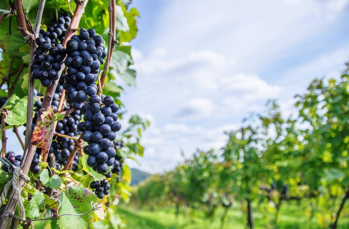 モルドバ観光旅行の魅力を紹介!気になる治安やおすすめのワインは?