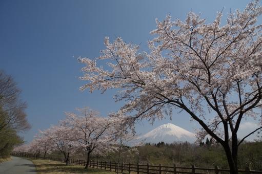 富士宮には観光スポットが沢山!おすすめの名所や人気のグルメもご紹介!