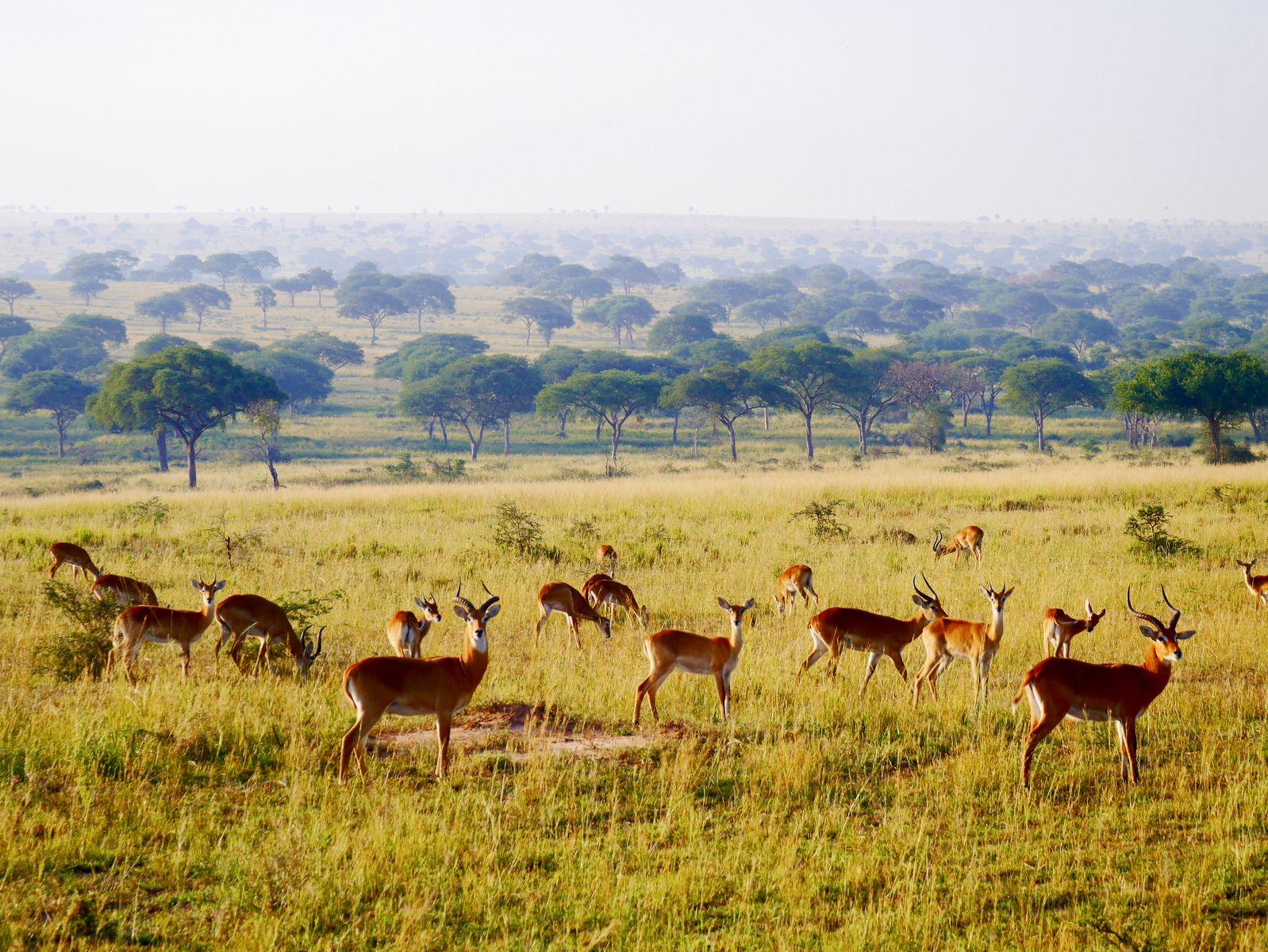 ウガンダ共和国の観光スポット7選!治安は?楽しい旅行で注意すること!