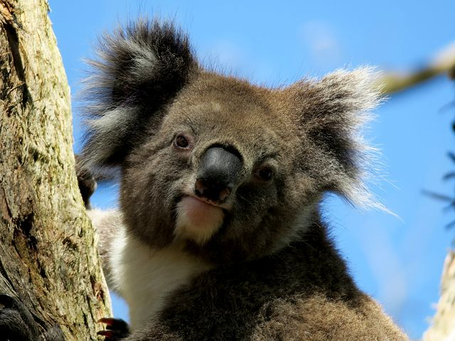 オーストラリアの気候!特徴や年間平均気温や降水量は?服装の注意点も!