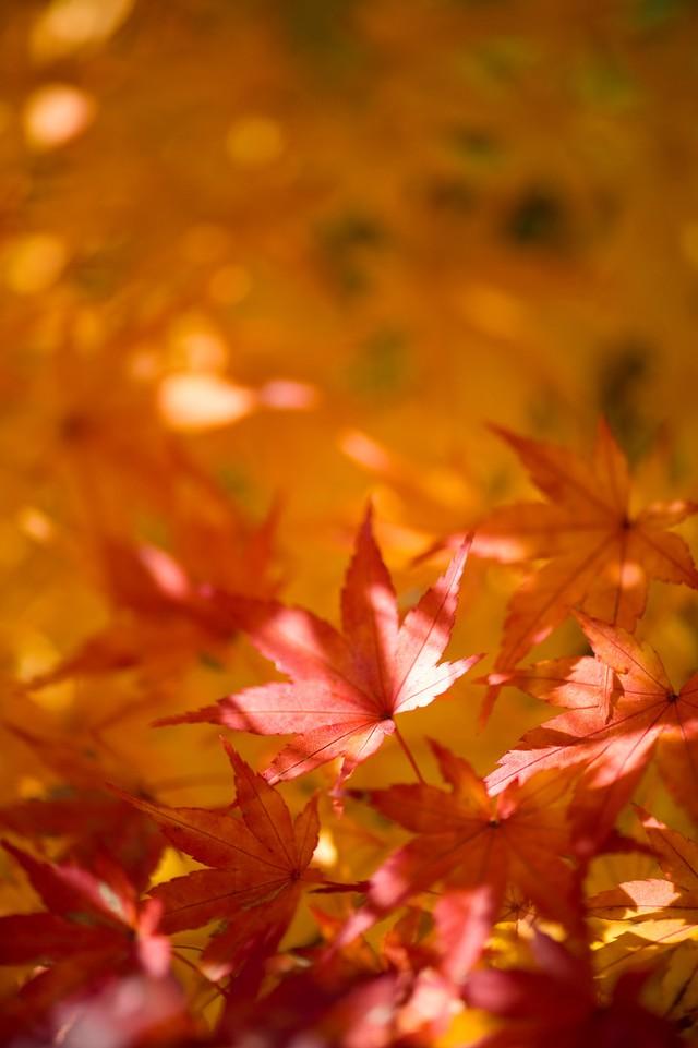 寸又峡は紅葉がきれい!気になるアクセスや駐車場の情報を紹介!