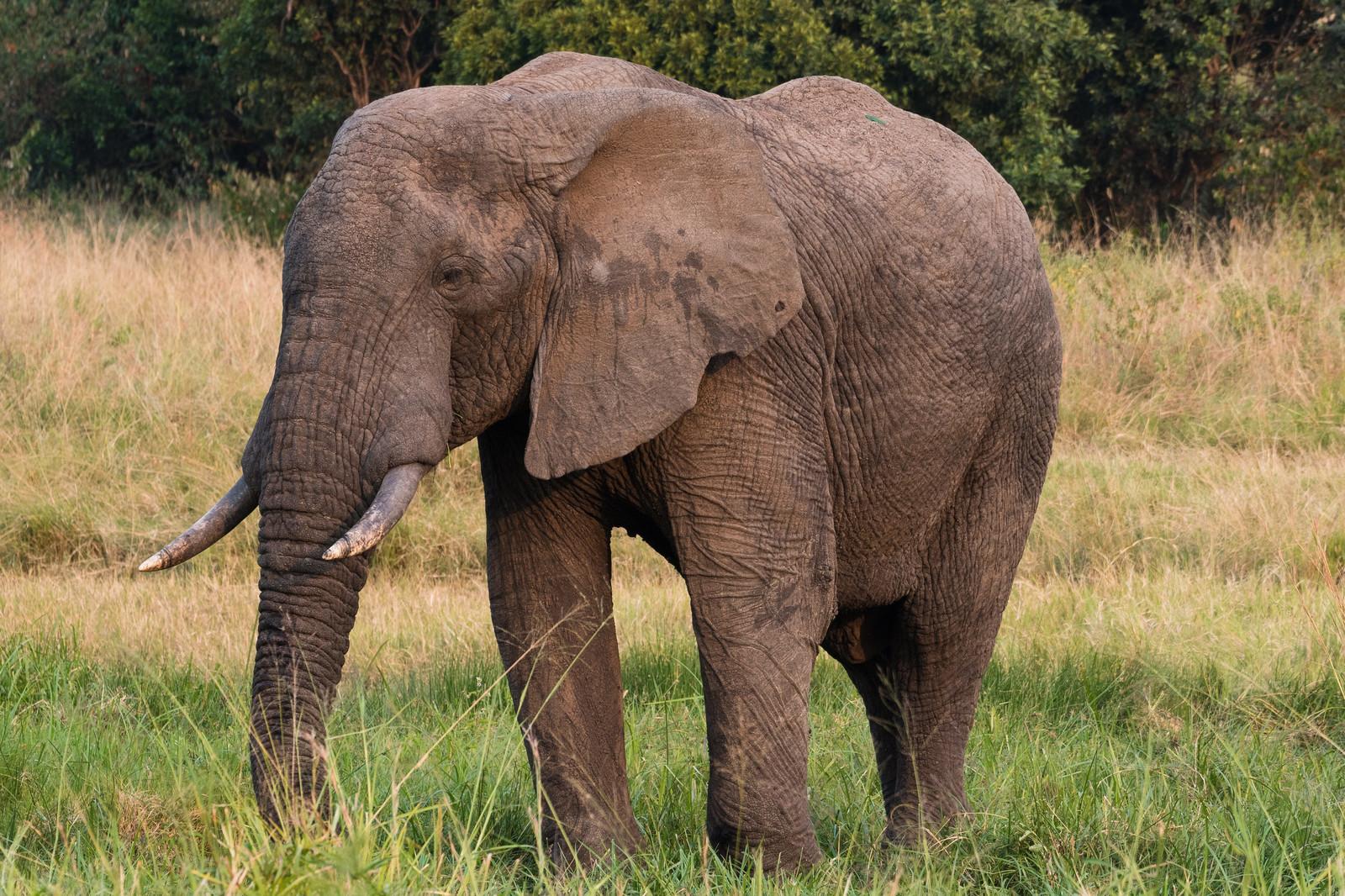 中央アフリカの旅行&観光スポットを紹介!治安注意して滝やバンギを満喫