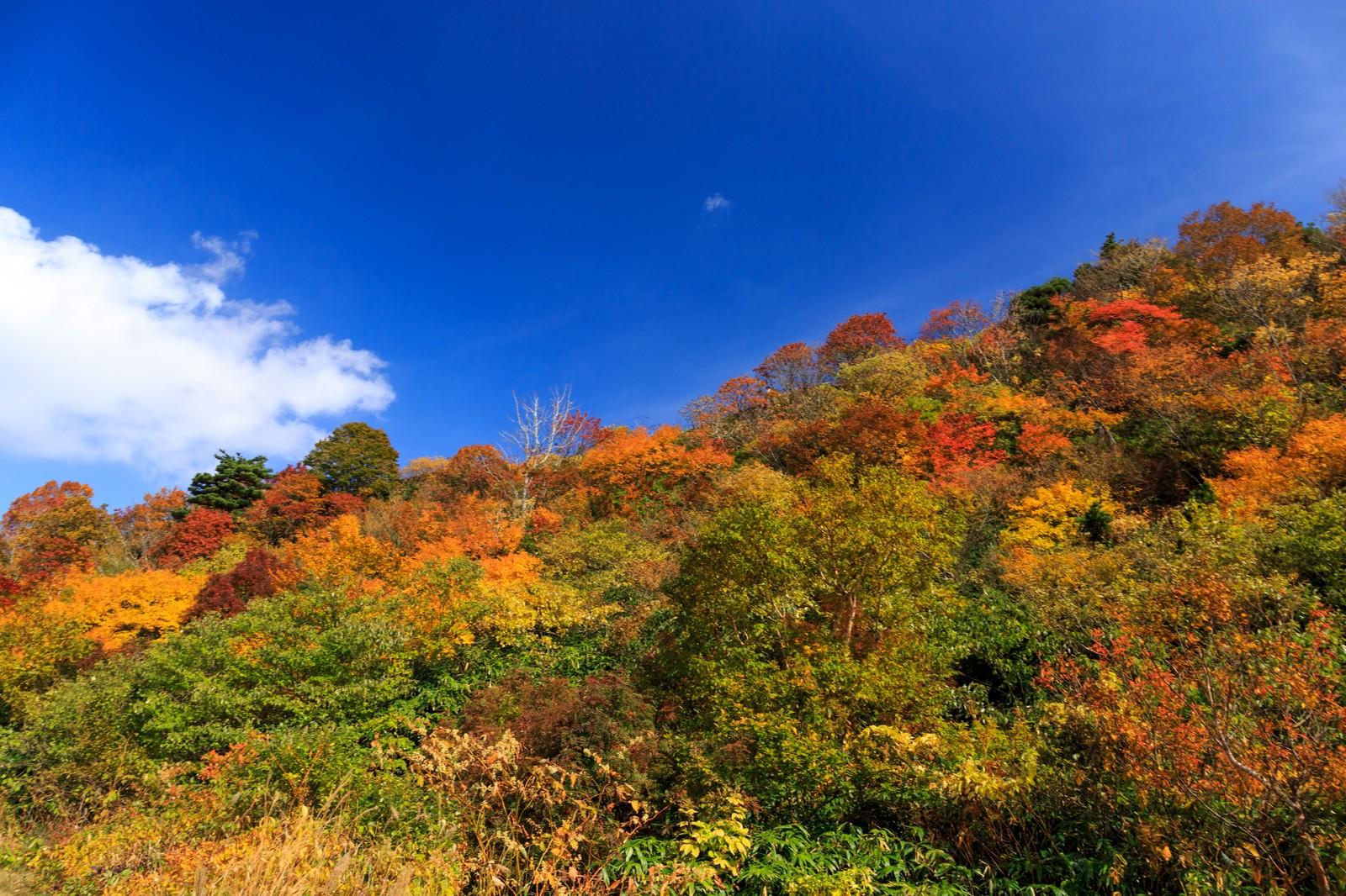 栗駒山の紅葉は絶景!アクセス方法や見ごろは?ドライブもおすすめ