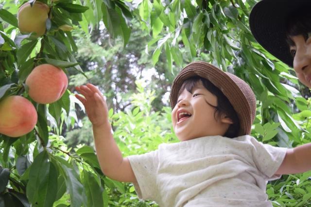 桃狩りなら山梨へ行こう!おすすめの人気農園を紹介!食べ放題もアリ!