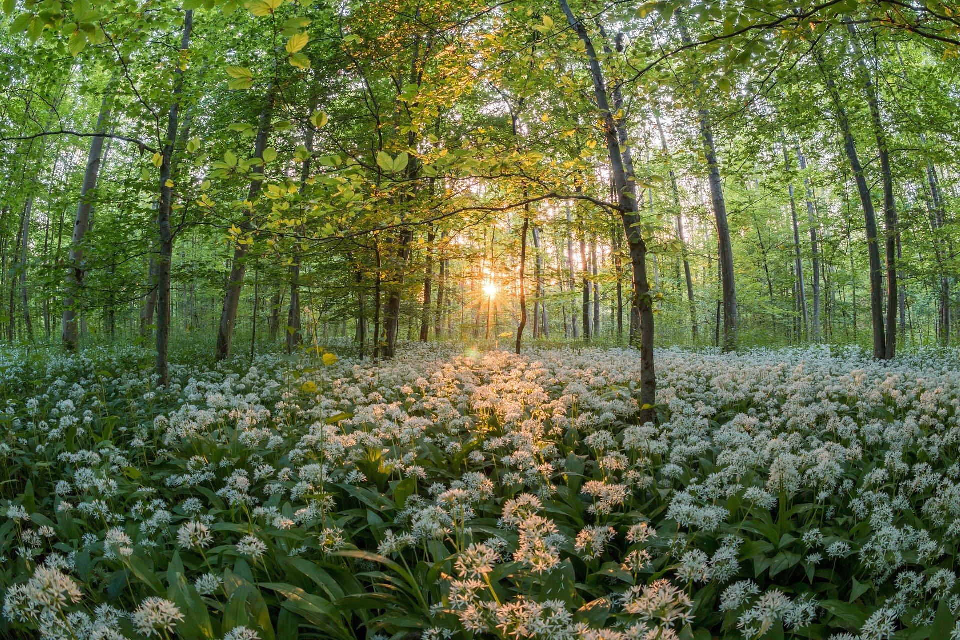 ウィーンの森の散歩道を観光!ベートーベンゆかりの地!おすすめスポット!
