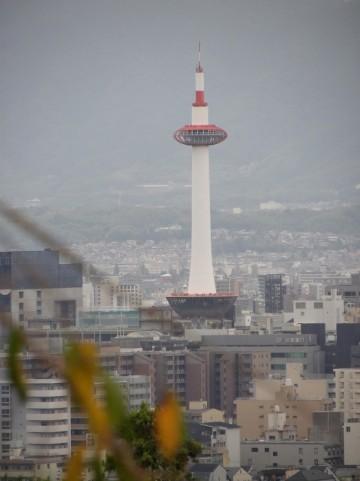 京都水族館のおすすめランチは?館内から周辺まで人気レストランやカフェを紹介!