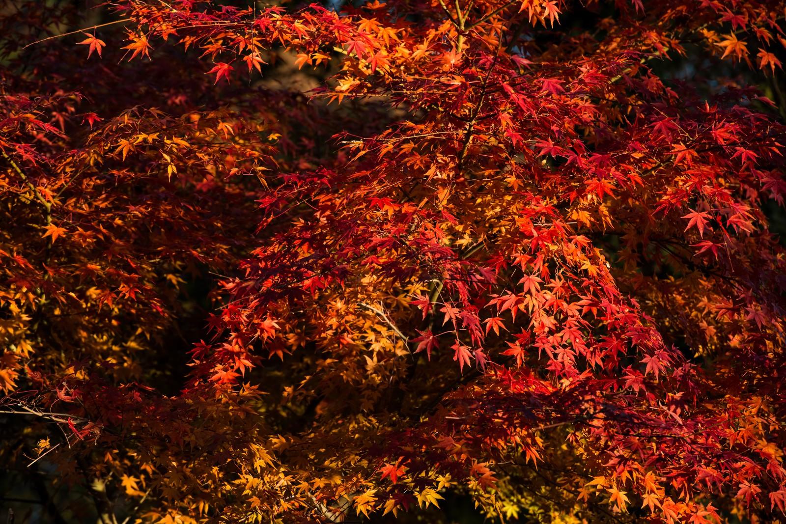 武雄温泉「御船山楽園」の紅葉がきれい!ライトアップの時間や見頃は?