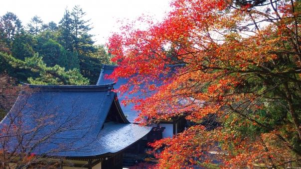 京都・高雄は紅葉の名所!寺院観光や美しい景色のドライブも!