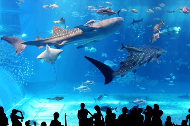 美ら海水族館の周辺ランチ特集!子連れで使えるおすすめカフェなど!