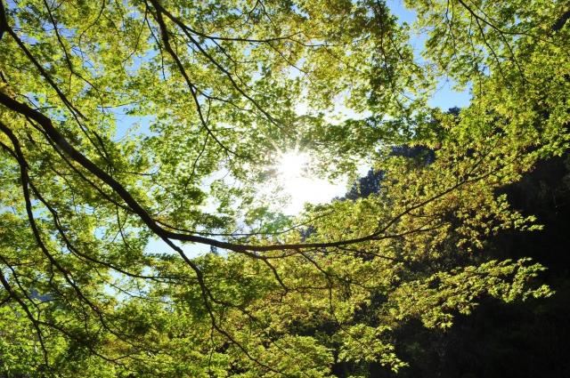 檜原村は東京唯一の村!自然が豊かで温泉もある穴場の観光スポット!